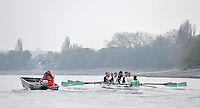 Putney, GREAT BRITAIN,  Cambridge UBC CUBC. Thursday morning training session, Tideway week. Championship course. Putney/Mortlake, Thursday   05/04/2012 [Mandatory Credit, Peter Spurrier/Intersport-images]..CUBC. crew  Bow. David Nelson, 2. Moritz Schramm, 3. Jack Lindeman, 4. Alex Ross , 5.Michael Thorp, 6. Steve Dudek, 7  Alexander Scharp, Stk Niles Garratt . Cox. Ed Bosson  Chief Coach - Steve TRAPMORE.