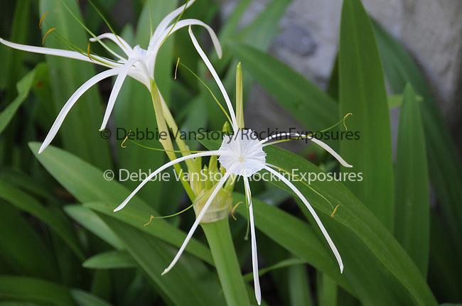 Tropical Flower at Railay Beach in Krabi, Thailand on June 04,2008                                                                                    Copyright 2008 Debbie VanStory/RockinExposures