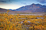 Brooks Range in Arctic National Wildlife Refuge from Galbraith Lake in evening. Fall foliage is in the foreground. Arctic Alaska, Autumn.