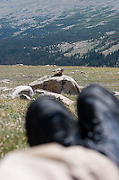 Taking a break with a friend near treeline next to Lake Husted - Rocky Mountain National Park