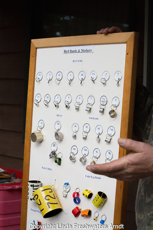 Display showing different bird bands