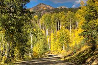 Fall in the San Juan National Forest near Pagosa Springs Colorado.