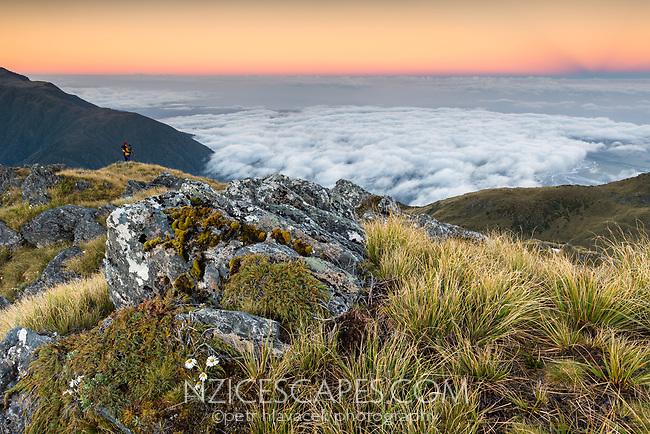 Alpine dawn viewed from Mt. Fox with clouds covering Tasman Sea. Person on left, Westland Tai Poutini National Park, West Coast, UNESCO World Heritage Area, New Zealand, NZ