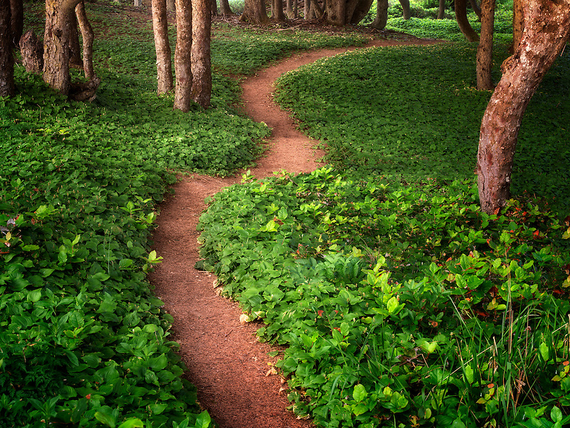 Path at Seal Rock, Oregon