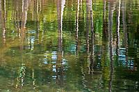 Water swamp reflection Palawan