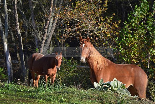 Horses graze in Breathitt County, KY Photo by Amy Gaskin