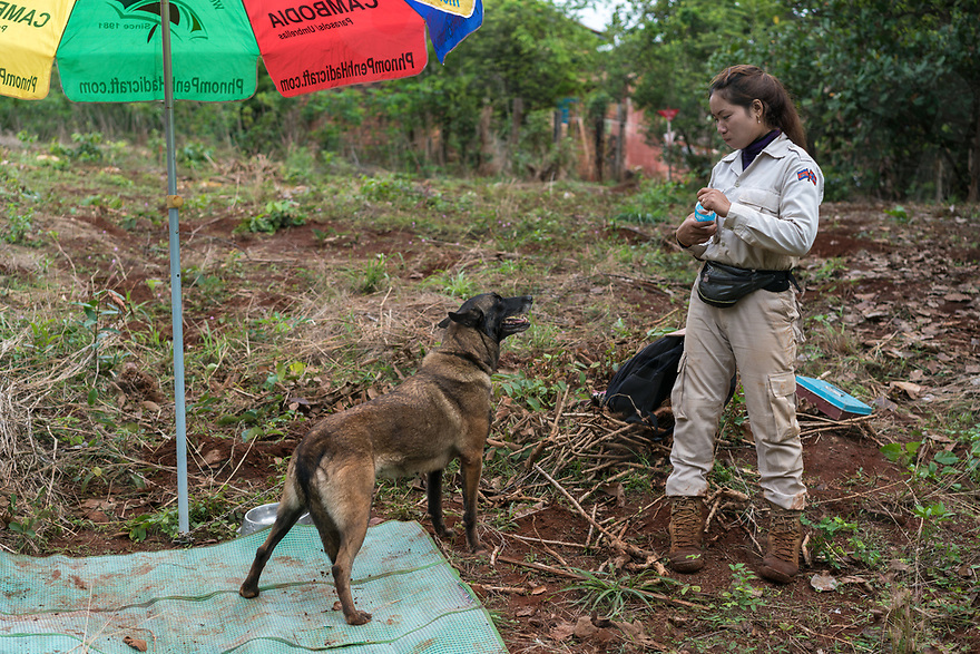April 27, 2017 - Banlung (Cambodia). Mao Neav looks at her dog – a Belgian shepherd – J-Liv. NPA has recently started using explosive detection dogs in their clearance missions as they are faster than metal detectors. © Thomas Cristofoletti / Ruom