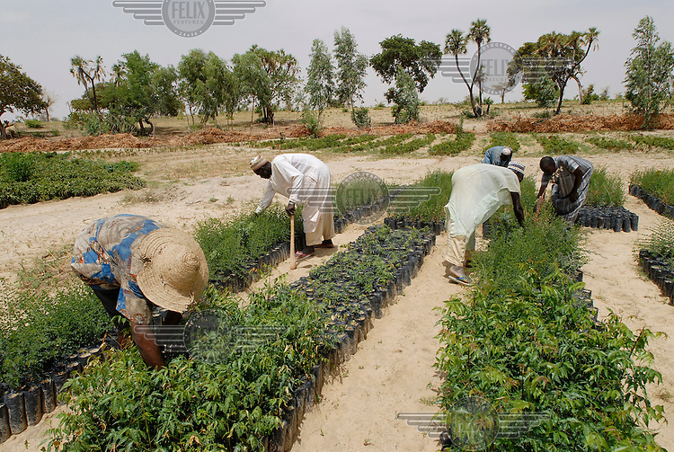 Local farmers tend to their crops grown on an IFAD-supported agricultural irrigation project. The International Fund for Agricultural Development (IFAD), a specialised UN agency established to finance agricultural projects in developing countries, runs several programmes that work to combine environmental protection with agricultural productivity in the dry sub-Saharan Sahel region.
