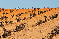 tempranillo old vine sandy soil Bodegas Vinas del Cenit, DO Tierra del Vin de Zamora spain castile and leon