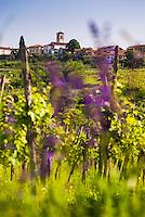 Goriska Brda Wine Region, Slovenia