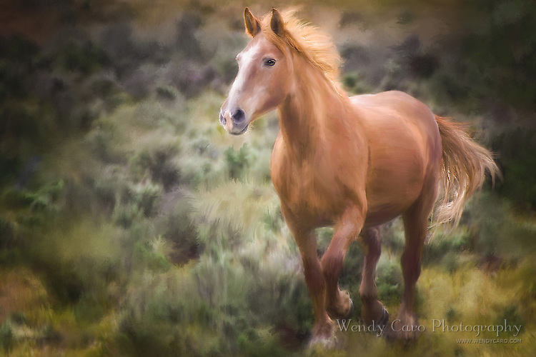 Chestnut/Sorrel Stallion running through field of sage and high grasses of deep greens and yellows