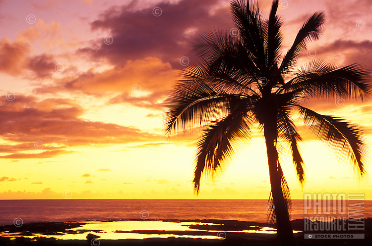 Sihouette of palm tree at sunset along the north Kona coast