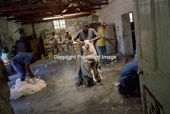 Workers shearing sheep on a rural farm in Sutherland, South Africa. The (SALT) Southern African Large Telescope, the largest in the southern hemisphere, is being built in this small rural farming town in the Karoo, South Africa. The town has seen an increasing number of visitors and investors coming to the town opening Bed and Breakfasts and buying property. The telescope will help scientists to view stars and galaxies a billion times too faint to be visible to the naked eye. (Photo by: Per-Anders Pettersson)