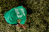 18-year-old Rodriguez Gomez drys out a pile of coca leaves before packing them into bags to sell later in the day in Eterazama, Bolivia. Every three months, the Gomez family harvests their Coca plants to sell. While it is difficult to make a solid living growing Coca, Gomez says he plans to continue working with the plant and hopes to take over the family farm when he grows up. He says that he can make more money with coca than any other product.