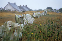 Europe/France/Bretagne/56/Morbilhan/Carnac: Alignements du Menec
