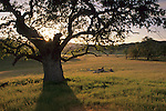 Sunset behing oak tree, Isabel Valley, Santa Clara County, California