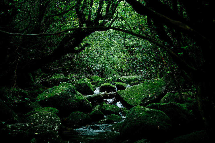 "Yakushima, June 2011 - On the way for ""Mononoke forest"", which inspired Miyazaki for its anime movie ""Princess Mononoke""."