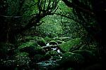 "Yakushima, June 2011 - On the way for ""Mononoke forest"", which inspired Miyazaki for its anime movie ""Princess Mononoke""."