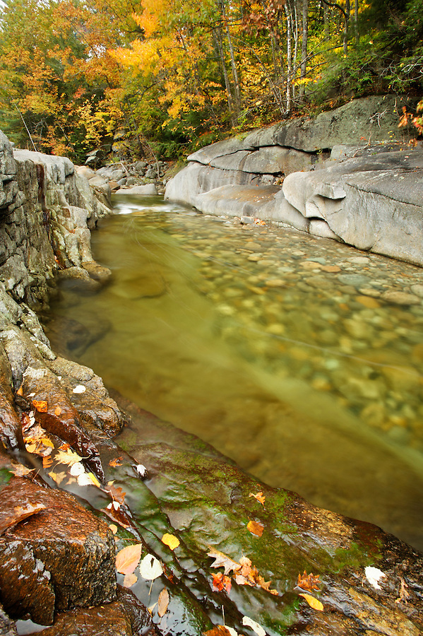 Fallen autumn leaves on rocks along side of creek, White Mountains, New Hampshire, USA