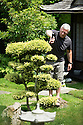 """20/06/14<br /> <br /> Japanese Garden with stream and Roger clipping holly. <br /> <br /> Full story here:<br /> <br /> http://www.fstoppress.com/articles/duffield-garden/<br /> <br /> Twenty years ago Roger Roberts and his wife Sue agreed to buy their four-bedroon suburban home near Derby. Roger hadn't even looked inside the house – he'd left Sue to do that. But it was the third of an acre garden that fired Roger's imagination.<br /> <br /> """"It was all laid-to-grass, but I knew what I wanted to do with it – it was like a blank canvas"""" explained Roger, who has now filled the garden with more than 800 different plants.<br /> <br /> The recently-retired Brewery Export Sales Director, 63, has themed his garden into areas of colour and different parts of the World and spends ten hours-a-day obsessionally working on his garden in Duffield.<br /> <br /> All Rights Reserved: F Stop Press Ltd. +44(0)1335 300098   www.fstoppress.com."""