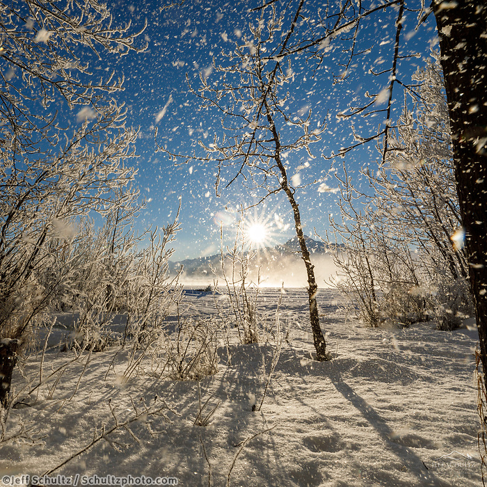 Winter landscape of frost falling from hoarfrost covered trees along the bank of the Matanuska River as the sun shines through on a sunny day in the Matanuska Valley near Palmer, Alaska. Pioneer Peak Chugach Mountains  Southcentral Alaska<br /> <br /> Photo by Jeff Schultz/SchultzPhoto.com  (C) 2019  ALL RIGHTS RESERVED