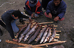A large net  catch of salmonids which  are prolific in this area of Mongolia  Outer Mongolia.  Tsataan Uul.