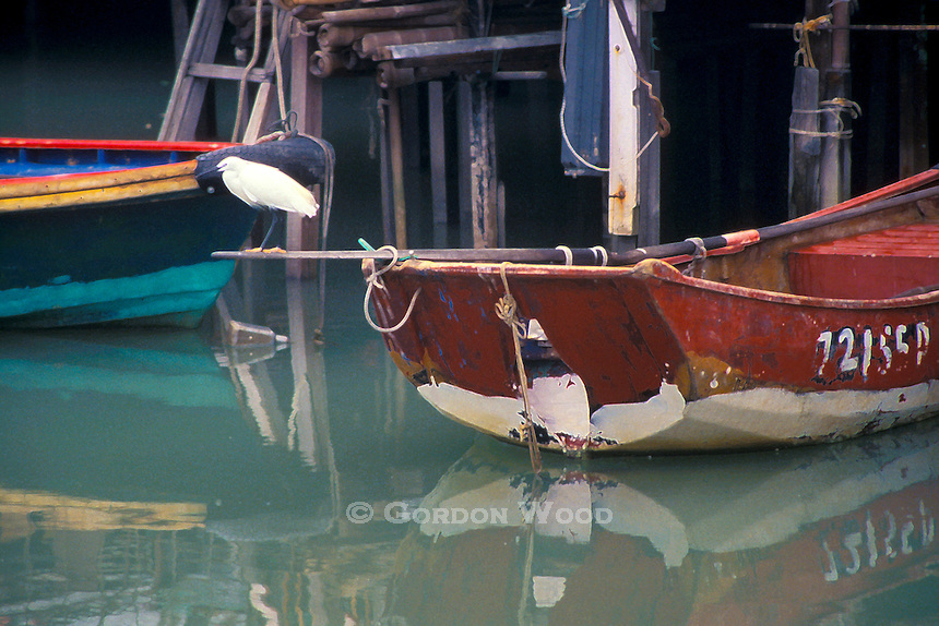 Bird on Boat, Tai O Harbour, Hong Kong, China