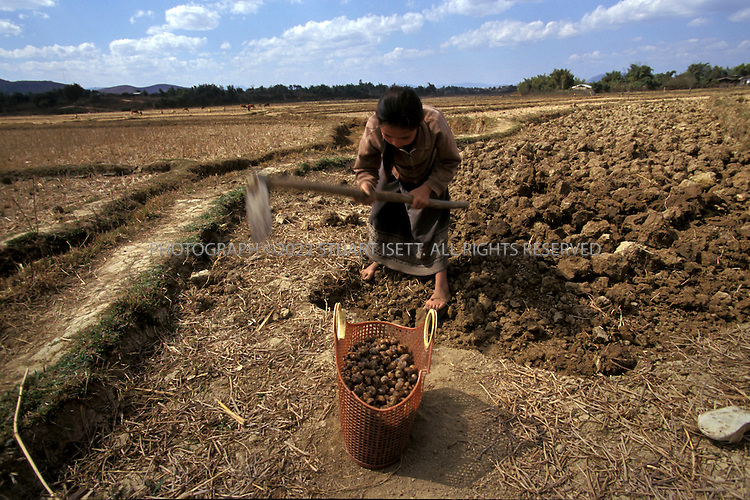 Phonsavan, Laos,..A woman uses a hoe to till her field. Laos is still scattered with thousands of unexploded American bombs but poverty forces farmers to ignore the risks of such work...All photographs ©2003 Stuart Isett.All rights reserved.This image may not be reproduced without expressed written permission from Stuart Isett.