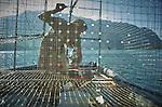 Villeneuve, le 28 juillet 2016, Hubert Fivat, pêcheur sur le Léman région du Haut Lac, se bat contre les cormorans qui mangent le poisson pris dans ses nasses , il se retrouve parfois avec un tiers de sa pêche© sedrik nemeth