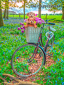 Assaf, CUTE ANIMALS, LUSTIGE TIERE, ANIMALITOS DIVERTIDOS, teddies, paintings,+Bicycle, Bicycles, Bike, Bikes, Bluebell, Bluebells, Bunch Of Flowers, Childhood, Color, Colour Image, Cute, Cycle, Forest, N+ature, Outdoors, Photography, Spring, Teddy Bear, Teddy Bears, Toy, Toys, Tree, Trees, Wood, Woodland,Bicycle, Bicycles, Bike+Bikes, Bluebell, Bluebells, Bunch Of Flowers, Childhood, Color, Colour Image, Cute, Cycle, Forest, Nature, Outdoors, Photogr+aphy, Spring, Teddy Bear, Teddy Bears, Toy, Toys, Tree, Trees, Wood, Woodland+,GBAFAF20140427,#ac#, EVERYDAY ,photos,photo