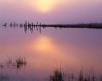 ORCAC_087 - USA, Oregon, Deschutes National Forest, Early morning sun breaks through fog over Crane Prairie Reservoir.