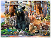 Howard, REALISTIC ANIMALS, REALISTISCHE TIERE, ANIMALES REALISTICOS, paintings+++++Redwoods poster,GBHRPROV133,#A# ,puzzles