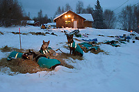 Dog Team Rests in Early Morning At Takotna<br /> 2004 Iditarod
