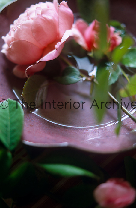A pink garden rose sits in a saucer filled with water