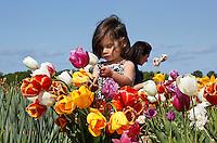 De Pluktuin Bloem en Bol in Lisse. Mensen kunnen hier tegen betaling zelf tulpen plukken. Meisje tussen de tulpen