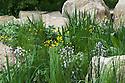 Caltha palustris (Marsh marigold), Lychnis flos-cuculi 'White Robin' (Ragged robin 'White Robin') and Soft rush (Juncus effusus). The Telegraph Garden, designed by Sarah Price, RHS Chelsea Flower Show 2012.