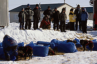 Spectators Watch J.Baker Work w/Dogs at Shaktoolik