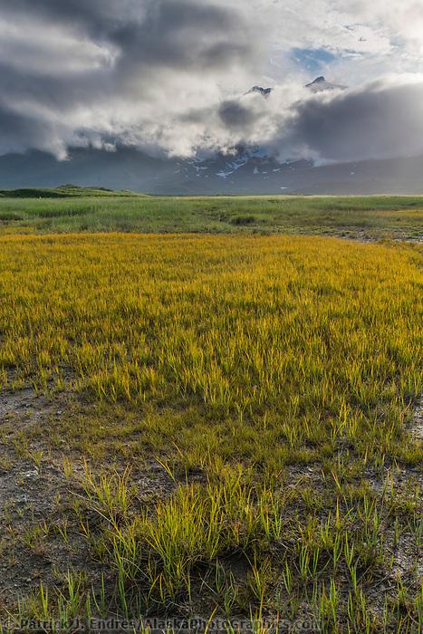 Grassy meadow in Katmai National Park, Alaska Peninsula, southwest Alaska. Aleutian mountain range covered by clouds in the distance