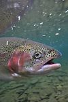 2010 Underwater rainbow