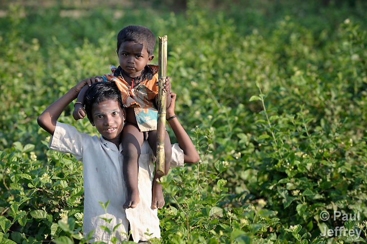 A boy carries his younger sibling on his shoulders across a field of jasmine flowers outside Nallur, a small village in the state of Tamil Nadu in southern India.