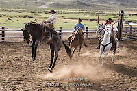Just a little stiff Cowboys working and playing. Cowboy Cowboy Photo Cowboy, Cowboy and Cowgirl photographs of western ranches working with horses and cattle by western cowboy photographer Jess Lee. Photographing ranches big and small in Wyoming,Montana,Idaho,Oregon,Colorado,Nevada,Arizona,Utah,New Mexico.