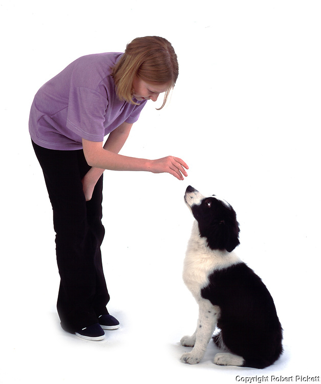 Young girl, asking puppy border collie dog to sit, 12 years old, studio, white background, cut out, pet, domestic