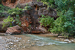 The virgin river just downstream from the narrows at Zion National Park, Utah, USA
