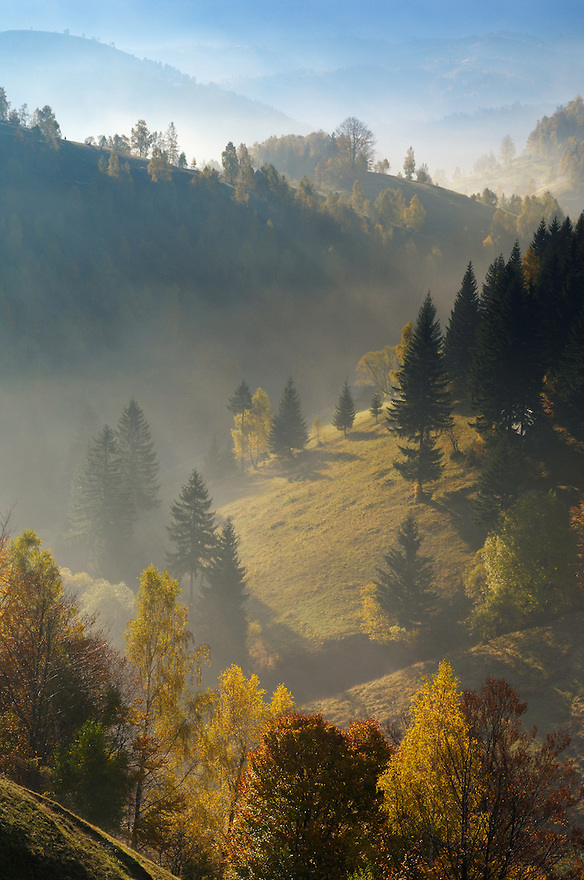 hilly landscape in the morning light, Magura, National Park Piatra Craiului, Transylvania, Southern Carpathians, Romania