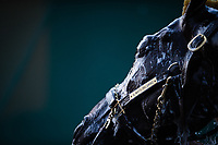 BALTIMORE, MD - MAY 18: Always Dreaming receives a bath after training on the track in preparation for the Preakness Stakes at Pimlico Race Course on May 18, 2017 in Baltimore, Maryland.(Photo by Douglas DeFelice/Eclipse Sportswire/Getty Images)