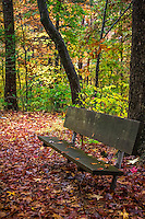 A wood bench in the Albert Pike Campground on the Little Missouri River in the fall.