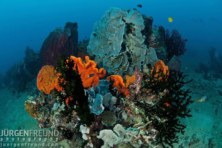 Different sponges in the reef .