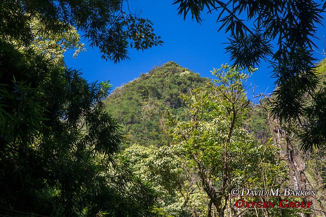 Near Bamboo Forest