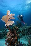 Underwater photographer, Bahama Islands