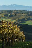 France, Aquitaine, Pyrénées-Atlantiques, Béarn, Coteau du Jurançon, Monein:    Vignoble de Jurançon et les sommets des Pyrénées  //  France, Pyrenees Atlantiques, Bearn,Slopes of Jurançon, Monein : Jurançon vineyard and Pyrenean summits
